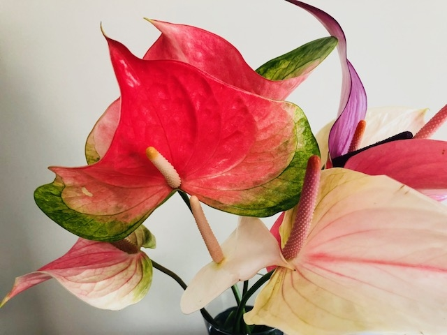 Hearts and Orchids image