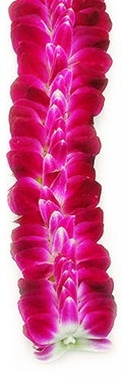 Sweetheart Orchid Lei