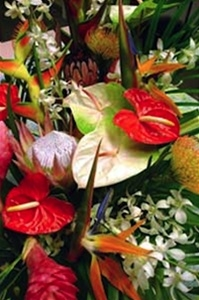 Maui Goose Royal Island Bouquet includes colorful heart-shaped anthurium, exotic orchids, birds of paradise, gingers, long lasting protea, tropical foliage