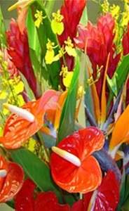Tropical Flowers and Foliage harvested with that special event in mind.  Various vibrant colors and forms make your event memorable. Create one large arrangement or many smaller arrangements.  All the tropical flowers and foliage sure to