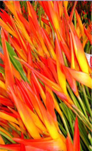 Bright orange blooms on long stems