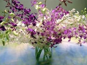 Dendroium Orchid Bouquet available in ten stem and 20 stem bouquets.  Easy to arrange and long lasting.  Perfect for weddings, birthdays, Mother's Day  Office or home gift