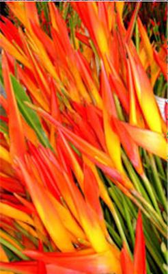 Image Tropic Fleur